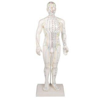 CHINESE ACUPUNCTURE FIGURE, MALE