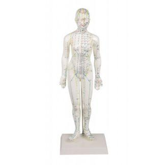 CHINESE ACUPUNCTURE FIGURE, FEMALE