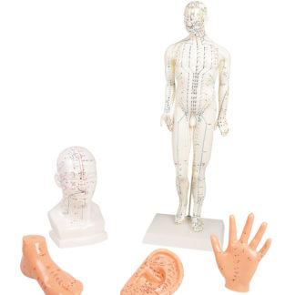 CHINESE ACUPUNCTURE SET, 5 MODELS