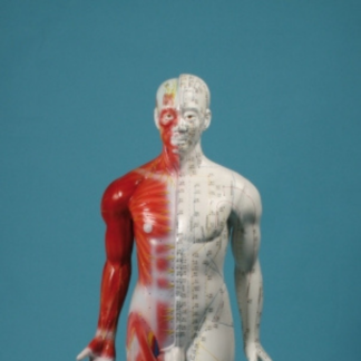 Chinese Acupuncture figure, Male – Erler-Zimmer