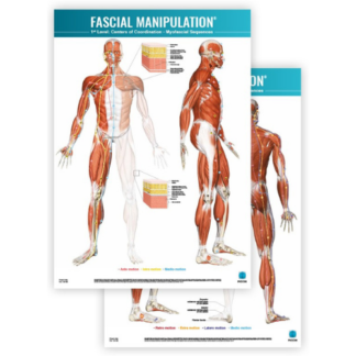 Faskia kartta FASCIAL-MANIPULATION-1st-Level-Poster-Centers-of-Coordination-Myofascial-Sequences