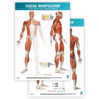 Faskia kartta FASCIAL-MANIPULATION-2nd-Level-Poster-Centers-of-Fusion-Myofascial-Diagonals