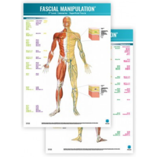 Faskia kartta FASCIAL-MANIPULATION-3rd-Level-Poster-Catenaries-Superficial-Fascia
